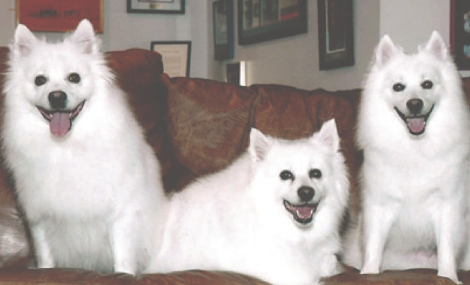 Tails of Our Town – Kobe, Shelby & Jack
